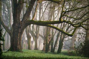 tiny forest nederland