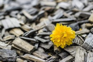 yellow-370256_1920